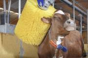 В Украине вводятся европейские стандарты для молока