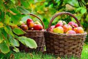Яблоки очень полезны для сердца